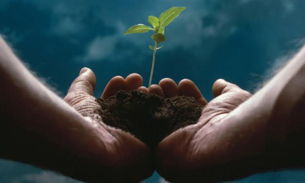 Entrepreneurship: Forging Your Path