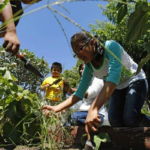 """""""Urban Seeds"""" A Story About The School Grown Movement"""